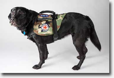 Sponsor a Disabled Veteran and his Service Dog
